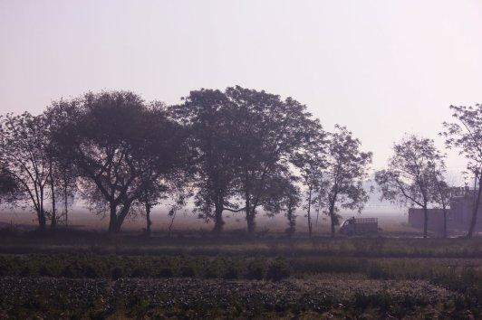 farmland - Punjab