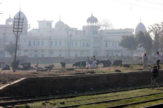 gurudwara - punjab